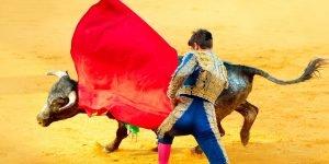 La tauromachie est cet «art» contesté dont l'objectif est de mettre un taureau à mort lors d'un spectacle. Photo par Subbotina/Depositphotos.com