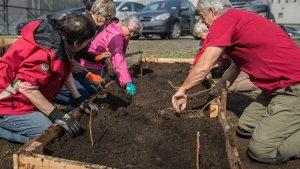 Des framboisiers ont été plantés dans cette plate-bande par le groupe des Incroyables comestibles Rivière-du-Nord près du Cégep de Saint-Jérôme, le 2 mai 2017.